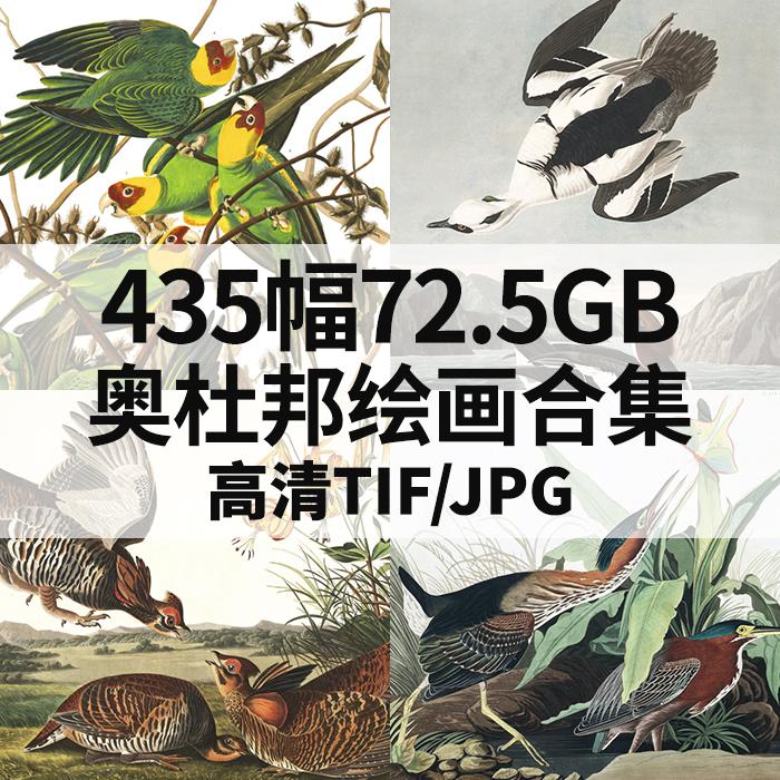 435幅72.5G奥杜邦油画插画合集植物鸟类动物图谱写生电子高清素材